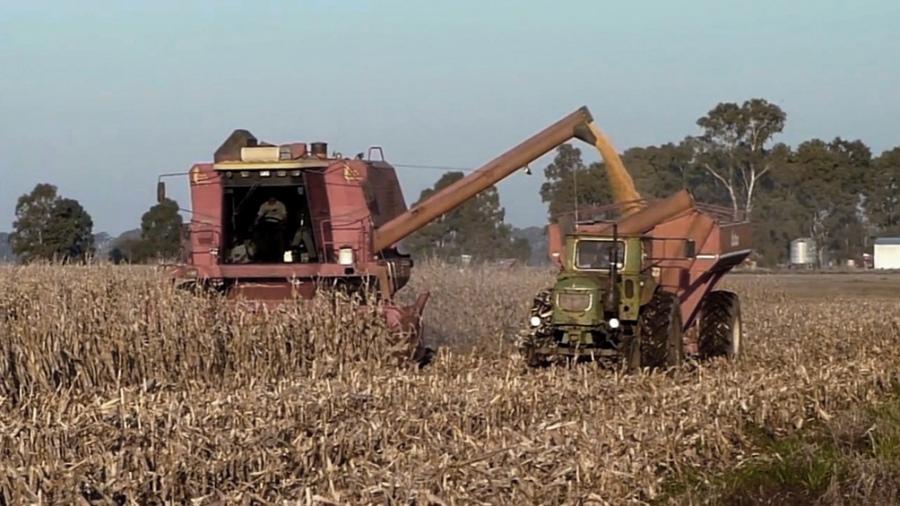 Dejarán sin efecto el límite de 30.000 toneladas diarias para exportación de maíz