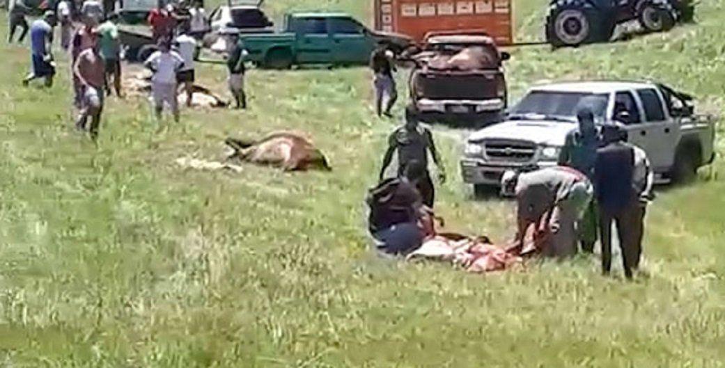 Ruta 14: Volcó un camión con hacienda y  vecinos carnearon animales